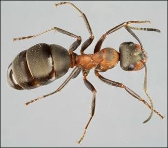 myror i fötterna