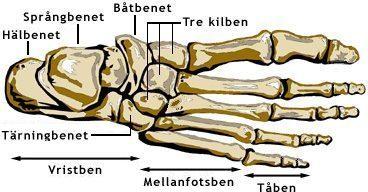 kalla ben fötter