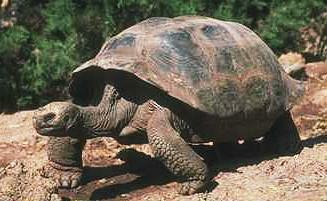 hur gammal kan en havssköldpadda bli