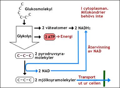 koldioxid i blodet