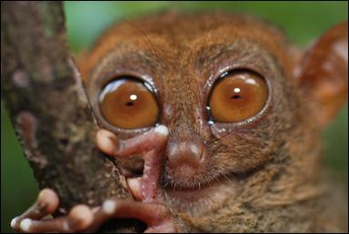 djur med stora ögon
