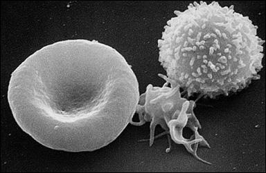 för många vita blodkroppar